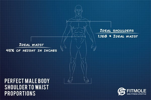 ideal male body proportions