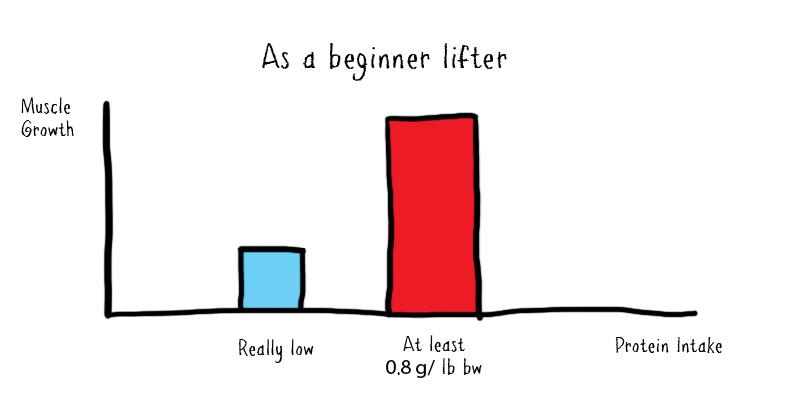 beginner lifter protein